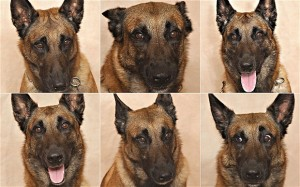 Dog_expressions